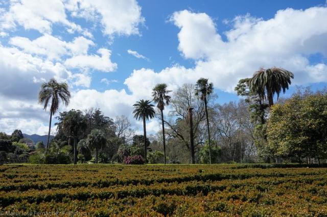 En el último año han sido tratadas hasta siete palmeras en este parque debido a la infección por el picudo rojo, parece que sin demasiado éxito.