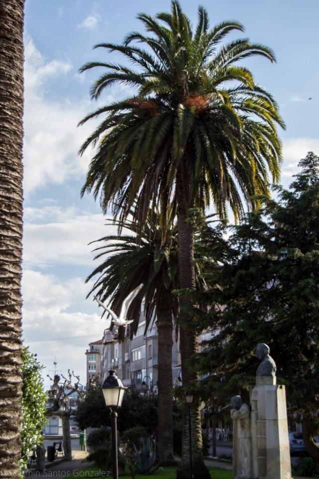 El espacio rinde homenaje al indiano Félix Soage Villarino, que sufragó la construcción del mercado y la restauración de la colegiata a principios del siglo XX, entre otras cosas.