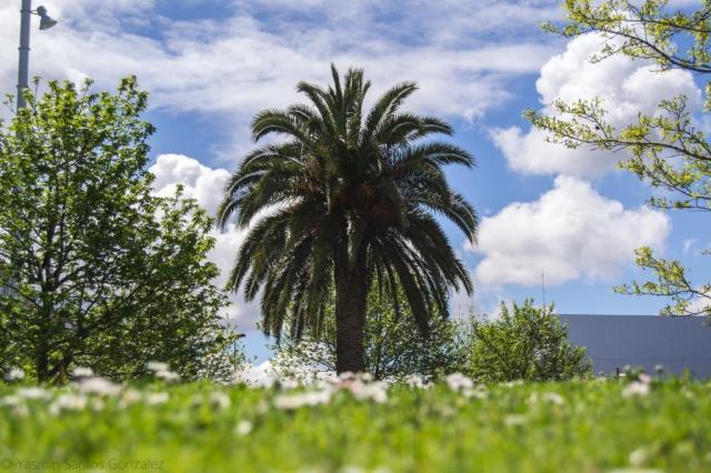 Convertido en una zona marginal a las afueras de A Coruña, entre el polígono de A Grela y la ronda Outeiro, el pueblo de Vioño será objeto de una intensa operación urbanística para su integración en la ciudad.