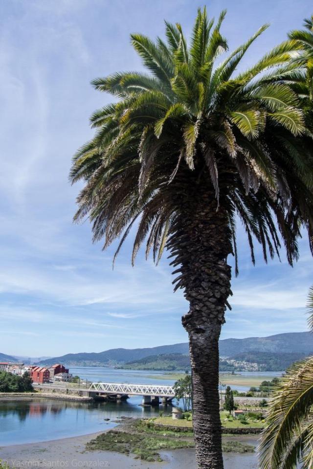 En 1921 la finca es adquirida por Avelino Justo Cambeses, pero desconocemos quién y en qué momento plantó las palmeras canarias.