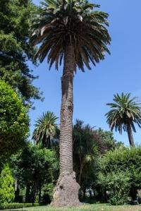 En este espacio, declarado Bien de Interés Cultural en el año 1946, con categoría de Jardín Histórico, conviven más de trescientas especies vegetales distintas.