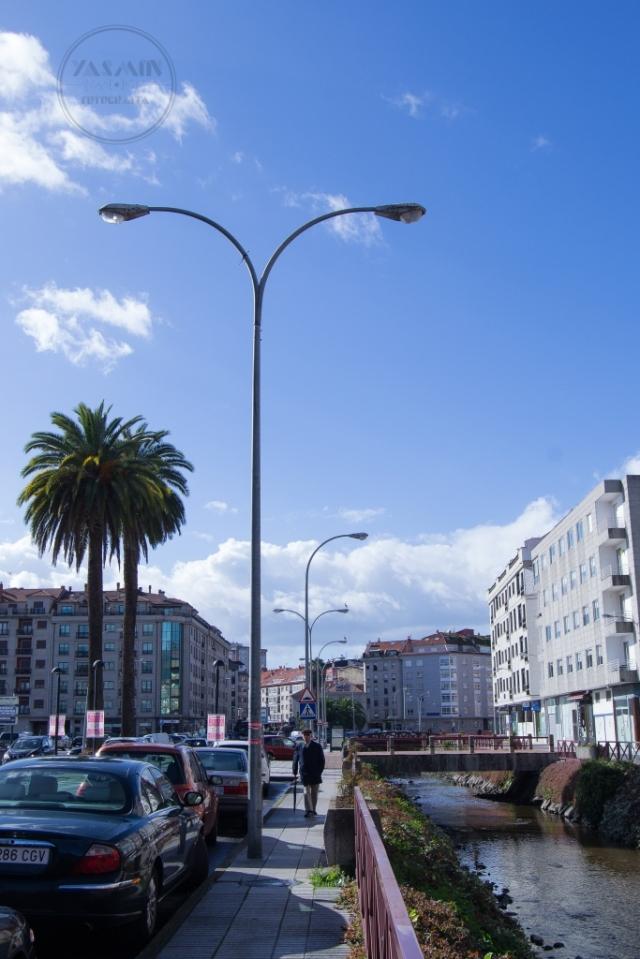 Se alzan estos dos ejemplares de palmera canaria en la avenida Rodrigo de Mendoza, pareciendo enmarcar la entrada del recinto del Pabellón Fexdega, que se encuentra inmediatamente al sur.