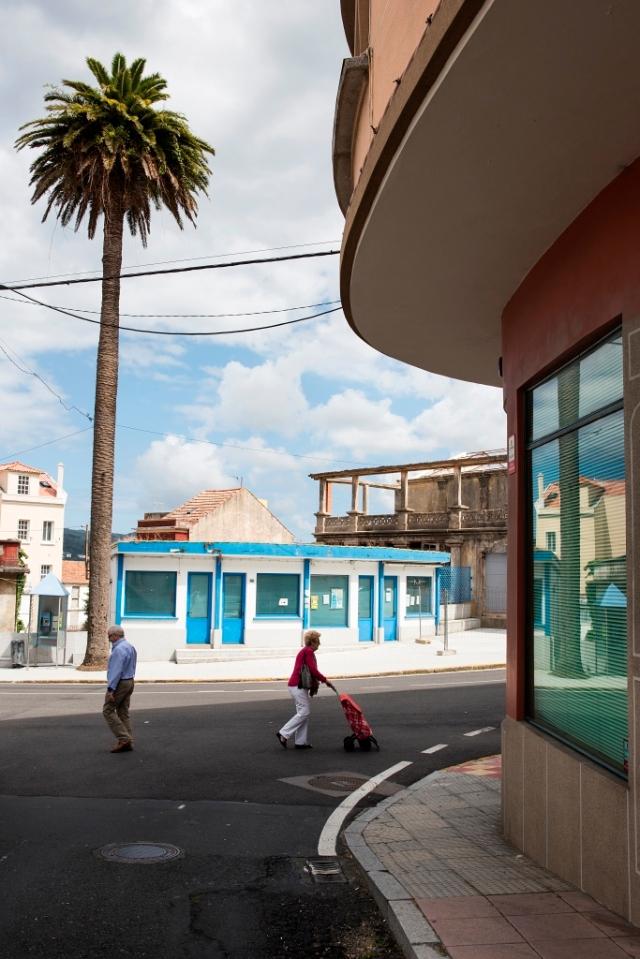 Espectacular ejemplar de palmera canaria que se encuentra junto al Cine Zárate, en el centro de la localidad.