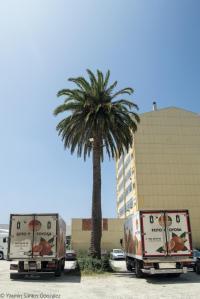 Actualmente el espacio que ocupaba la casa de Gloria Villamil se haya habilitado como aparcamiento municipal, sobreviviendo dos palmeras de gran porte, restos del jardín de la finca.