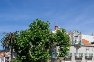 """Esta palmera canaria de gran tamaño se hallaba situada en el Paseo de Castelao de la villa morracense, ante la cafetería """"Cangaceiro"""" que daba nombre al ejemplar."""